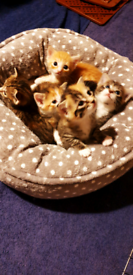 3 Adorable kittens looking for caring homes