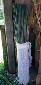 5' Bamboo stakes (green - new)