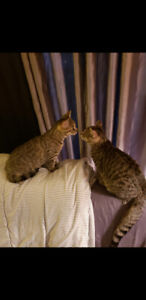 7 month old cats