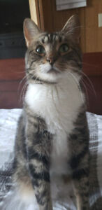 """Cuddly Male Cat """"Lep"""" for Adoption"""