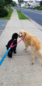 Dog Walker Available for Group Walks in Tantallon and Timberlea!