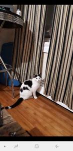 FREE CAT SEEKS TLC HOME ASAP