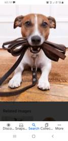 Dog walker / Dog sitter available