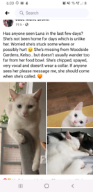 Missing Cat - Kelso