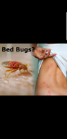 BedBUGS? CANT SLEEP? ● Call 647 961 7426 for a Free quote!