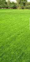 C&C Landscaping - Offering Summer and Fall Lawn Maintenance
