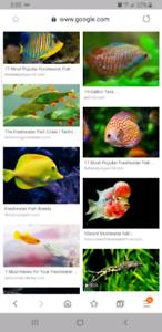 Je cherche des poissons si quelqu'un a à donner s'il vous plaît