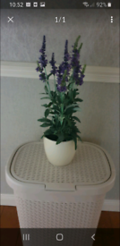 Faux Lavender large plant and pot