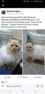 FOUND MALE RAGDOLL FLAMEPOINT