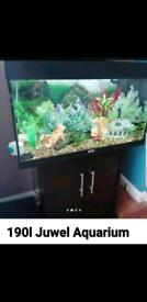 Fish tank 190LTR