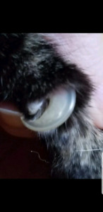 Cat nail trims in your home