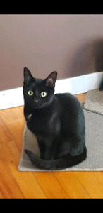 Cat to rehome