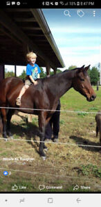 Beautiful Mare -- open to best offer needs rehoming ASAP