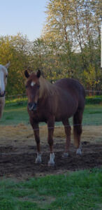 Horses for rehoming