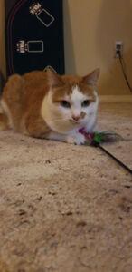 Rehoming sweet orange cat