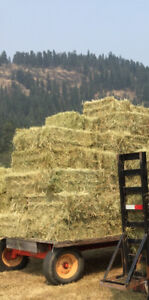 2017 small square hay bales-Enderby
