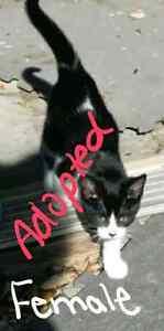Free kittens Sarnia Sarnia Area image 1