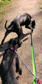 FREE DOG WALKER & SITTER