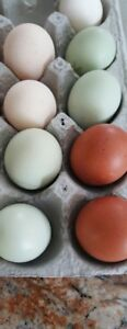 HATCHING EGGS FROM HERITAGE BREEDS