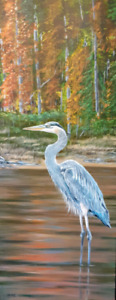 Blue Heron Canvas Prints