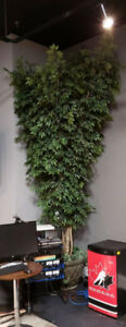Large indoor deluxe tree and pot - as new REDUCED, MOVING!!!