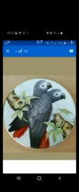 Set of 6 Parrot Plates