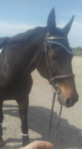 Horse for part board/lease/sale mississauga