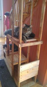 CHAT PERDU à Laplante Nord / LOST CAT in Laplante North