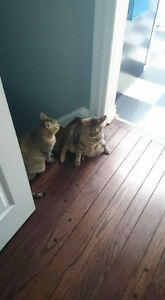Lovable, Adorable, Well-behaved Bonded Cats Need New Family
