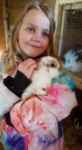 Lionhead Rabbits and Holland Lop for sale