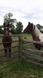 Outdoor Horse Board On A Quiet Family Farm  $200