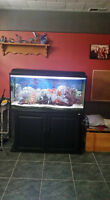 70 gallon aquarium with stand and accessories