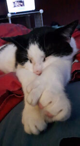 *TEMP rehoming for VERY social LOVING CAT