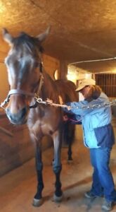 Equine Health & Emergency First Aid Course