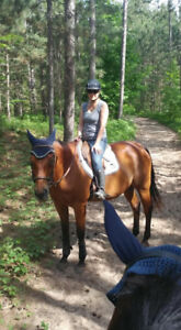 Part board this amazing lovely big quiet mare