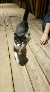 Found cat in Dartmouth- update: now at Bide Awhile