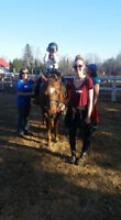 THUNDER BAY THERAPEUTIC RIDING ASSOCIATION NEEDS VOLUNTEERS!