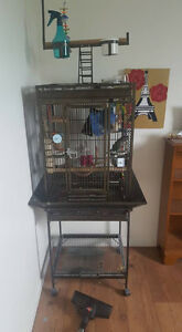 Conure turquoise et sa cage