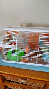 Male MOUSE with cage for sale