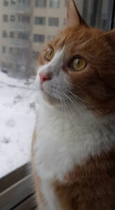 Need a Cat Sitter - Call West Island Cats