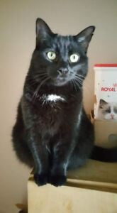 Chat noir perdu / Black cat lost (Ste-Marthe/Rigaud)
