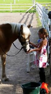 Horse Back Riding Lessons London Ontario image 2