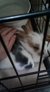 Rehome or swap a neutered male for spayed female bunny.
