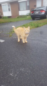Possible,lost cat in Dartmouth