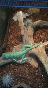 Reptile Rescue / Rehoming & Adoption