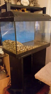 15  gallon tank with mirrored stand