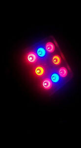 Pink LED Plant Grow Light 16W