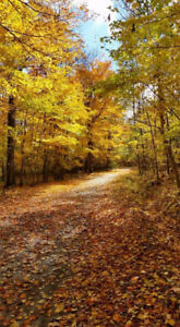 ***THANKSGIVING COTTAGE AVAILABILITY***