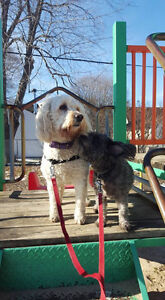 The Sophisticated Dog - Dog Walker, Pet Sitter, Trainer Sarnia Sarnia Area image 9