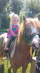 Pony Rides And/Or  Petting Zoo For Parties And Events